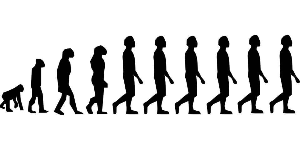 a-humanidade-evolution-296584_1280