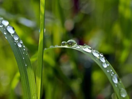 grass-1331703_640.jpg